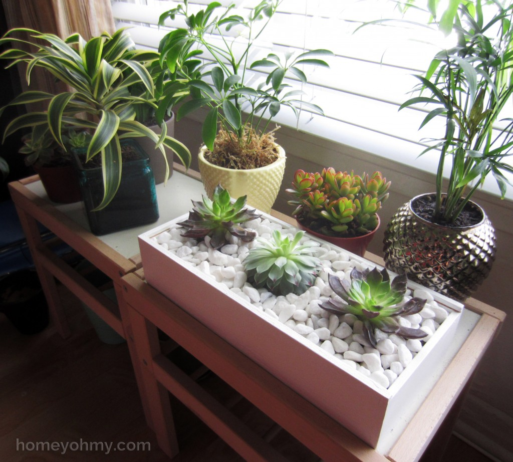 Succulent Box Display