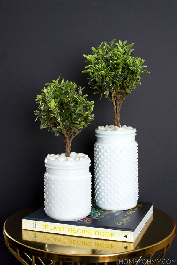 Euonymous Topiaries inspired by The Plant Recipe Book