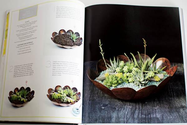 Succulent Garden Recipe
