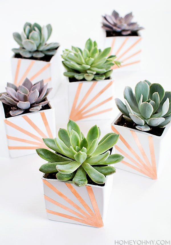 DIY Copper and White Succulent Planters