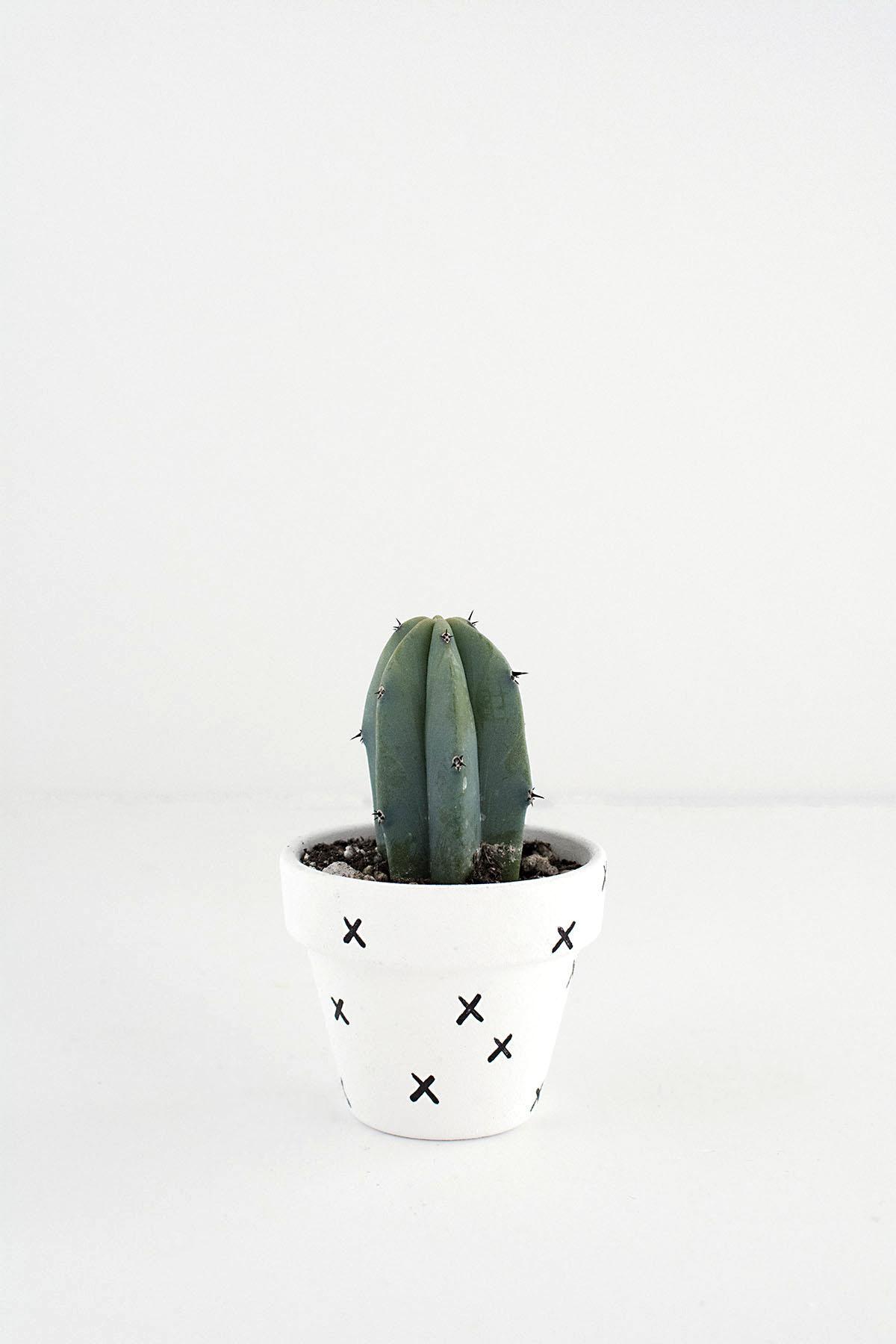 mini cactus-2
